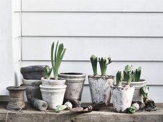 Neptune Bay Terracotta Pot | Jars & Pots