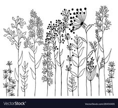 Find Hand Drawn Vector Design Wildflowers Floral stock images in HD and millions of other royalty-free stock photos, illustrations and vectors in the Shutterstock collection. Thousands of new, high-quality pictures added every day. Sharpie Drawings, Doodle Drawings, Sharpie Art, Doodle Art, Tattoo Drawings, Botanical Line Drawing, Botanical Illustration, Hand Illustration, Plant Drawing