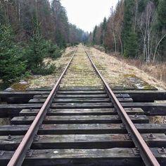 Going along the tracks through the Bialowieza Forest. Distance Hajnówka - Białowieza #agadelas #bialowiezaforest