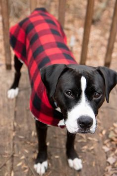 Sewing For Beginners Projects This cozy custom dog coat is a super easy beginner sewing project that is done in less than an hour, start-to-finish. It's the perfect gift for your furry friends! Sewing Hacks, Sewing Tutorials, Sewing Tips, Sewing Ideas, Photo Animaliere, Dog Jacket, Leftover Fabric, Mundo Animal, Love Sewing