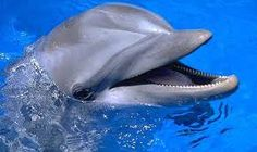 Image result for pictures of dolphins