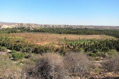 The oasis of Santiago, Baja California Sur, Mexico
