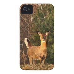 Deer at Sunrise iPhone 4 Case-Mate Case