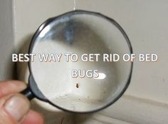 BEST WAY TO GET RID OF BED BUGS - #Mattress #Tips and #Buying #Guide