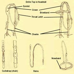 Parts of the Western Bridle - not sure why a noseband and that style of reins is included!