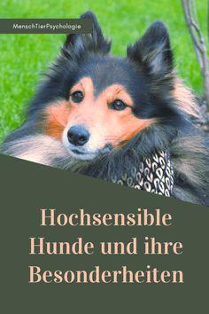 MenschTierPsychologie - Coaching für Hund & Mensch in Klagenfurt.