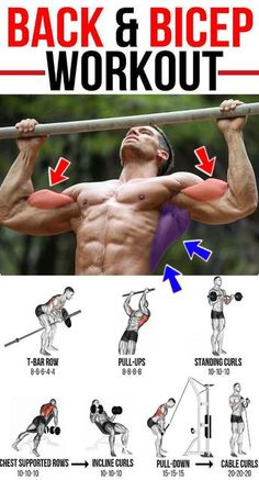Create a sculpted back and build your biceps with this amazing workout. This article is going to take you through one of many beneficial back and biceps workouts. This muscle building workout Gym Workout Tips, Weight Training Workouts, Fitness Workouts, Fun Workouts, Body Workouts, Back And Bicep Workout, Back And Biceps, Biceps Workout, Huge Biceps