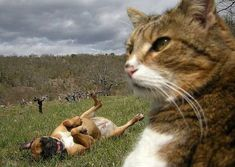 In this day and age the art of photobombs has been perfected by some individuals and even by some pets. Today I am showing you some examples.