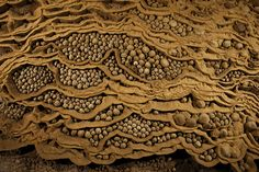 Rare cave pearls fill dried-out terrace pools in Hang Son Doong, Vietnam. This unusually large collection of stone spheres formed drip by drip over the centuries as calcite crystals left behind by water layered themselves around grains of sand, enlarging over time.