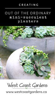 The trick to making a gorgeous succulent planter is to include a variety of shapes, sizes and types of succulents even in a very small container!