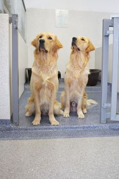 The top choice of flooring for veterinary practices in the UK is resin flooring, this article examines the 3 primary considerations for choosing veterinary flooring. Modern Flooring, Industrial Flooring, Cleaning Chemicals, Epoxy Floor, Commercial Flooring, Animal Control, Floor Finishes, Flooring Options, Floor Decor