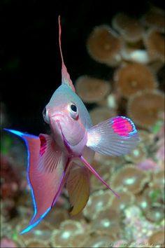 - Exotic fish -