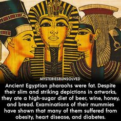 Egyptian Pharaohs, Interesting History, Interesting Facts, Stupid Funny Memes, Hilarious, High Sugar, Sugar Diet, Unbelievable Facts, Wtf Fun Facts