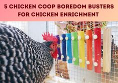 """With shorter days your chickens can adopt negative behaviors from being """"cooped up."""" Try these 5 chicken enrichment ideas to keep your chicken's minds stimulated and keep your flock healthy and happy. Cute Chicken Coops, Chicken Swing, Chicken Roost, Chicken Garden, Chicken Feeders, Hen Chicken, Backyard Chicken Coops, Chicken Coop Plans, Diy Chicken Waterer"""