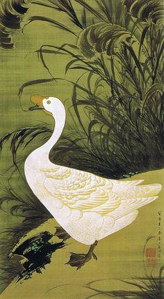 """動植綵絵 第二期( 1761-1765 ), 13. 芦鵞図[ろ が ず] , """"Pictures of the Colorful Realm of Living Beings"""", 1761, Jakuchu Ito"""