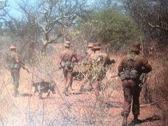 Doggies on a spoor Once Were Warriors, Military Working Dogs, Brothers In Arms, War Dogs, Defence Force, All Nature, My Land, Troops, Soldiers