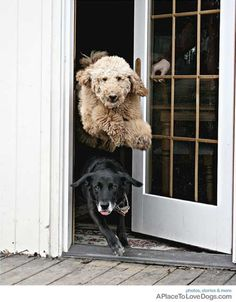 This I exactly what my dogs look like when it's time to go outside!