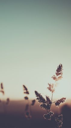 Nature photo by Mihoc Iris Aesthetic Pastel Wallpaper, Aesthetic Backgrounds, Aesthetic Wallpapers, Flower Phone Wallpaper, Iphone Background Wallpaper, Beautiful Nature Wallpaper, Beautiful Landscapes, Natur Wallpaper, Nature Aesthetic