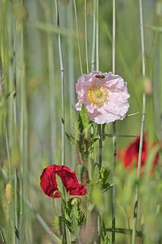 Flower 05.06.15