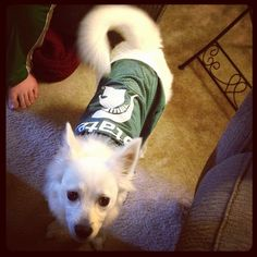 Sparty On!! #gogreen #spartans #Padgram
