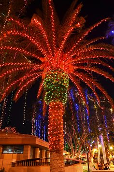Glendale Glitters, AZ palm trees lit for Christmas