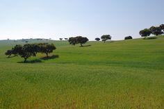 Alentejo, Portugal. (Photo: AiresAlmeida) #alentejo #visitalentejo #portugal #visitportugal #travel #visit #field #calm #peaceful