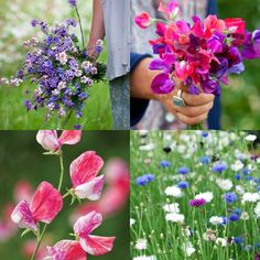 15 Flower Seeds to Plant this Spring - it is  so satisfying to grow plants from seed.
