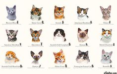 "Cat Breeds - Cluster of Kittens - Ivory - 24"" x 44"" PANEL"