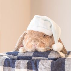 """* """"I can't get out of bed…"""" swipe The fictional bunny magazine. It comes with a freebie """"PuiPui Goodnight set"""". I want this one * #うさぎしんぼる展 in 静岡 は、今週日曜までだぉ! 今回、何人かの方から 「ぷいぷいおやすみセットはありますか?」という質問をいただき、はて?と思っていたのですが… * 静岡会場のエントランスには巨大フォトスポットがあり、そのひとつが「架空の」うさぎ雑誌なんです で、この雑誌の付録が「ぷいぷいおやすみセット」 写真2枚目、中央左 * このネタを事前に知っていたら、「ぷいぷいおやすみセット」ぜひグッズ展開したかった 中身はいったいなんなのか気になる 表紙のキャッチコピーもいちいちエッジが効いているこの雑誌✨嫌いじゃないこのセンス 静岡近辺にお出かけでしたらぜひお立ち寄りください ロップイヤーたなびかせて待ってます← * *"""