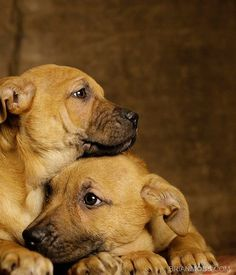 http://onegr.pl/1jgd3sZ  #animal #dog #rescue #adoptions #photography