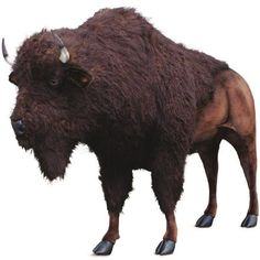 The Hansa Buffalo Plush Stuffed Animal is a realistic reproduction of this noble prairie animal. Sturdy enough to ride on, up to 150 pounds.This Hansa plush stuffed animal price includes ground shipping. Large Dog Breeds, Large Dogs, Baby Bison, Giant Stuffed Animals, Stuffed Toys, Grandeur Nature, Fact Families, Animal Facts, Dog Hacks