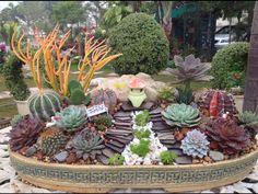 776 Best Succelants Images Succulents Planting Succulents Plants