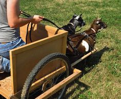 Working Goats: Putting the Cart before the Goat