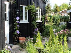 Fra Signes Vals. Klatrende klematis, sort træhus med hvide vinduer.