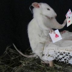 Funny Rats, Cute Rats, Cute Anime Profile Pictures, Matching Profile Pictures, Besties, Images Esthétiques, Cat Icon, Anime Best Friends, Cute Little Animals