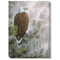 The Bald Eagle's Watchful Eye Wrapped Canvas Art is a wonderful piece of decor for the Patriotic American. The Eagles, Bald Eagles, Wildlife Paintings, Wildlife Art, Eagle Painting, Eagle Pictures, Eagle Art, Watercolor Bird, Pictures To Paint