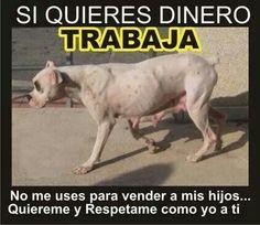 #NoAlMaltratoAnimal #perros #AdoptaNoCompres