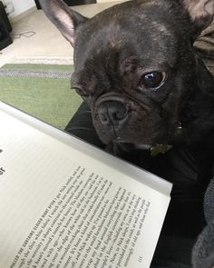 Batman the dog helping Rioter @therachelweber  read Departure by AG Riddle.