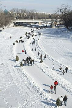 Winnipeg, Manitoba, Canada: Outdoor skating on the Forks and the Assiniboine River Trail, one of the world's longest skating surfaces Outdoor Skating, Skate Photos, River Trail, Recreational Activities, The Province, Winter Fun, Canada Travel, Wilderness, Tourism