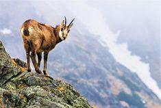 Tatranský národný park Mountains, Park, Nature, Travel, Animals, Naturaleza, Viajes, Animales, Animaux