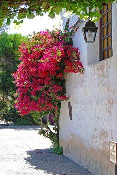 Carmel Mission Wall-Fine Art photograph-Red Bouganvilla