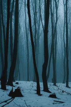 Writing World - anotic: Foggy Weekend Dark Photography, Landscape Photography, Nature Aesthetic, Mists, Scenery, Pictures, Beautiful, Woods, Backgrounds