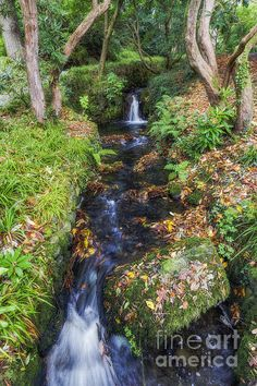Beautiful autumn leaves turn red, orange,yellow, and brown.They hang on lovely tree branches as the soothing breeze blows off the autumn leavesA beautiful stream flows so elegantly to its end. Snowdonia National Park, Autumn Forest, Beautiful Artwork, Beautiful Landscapes, Fine Art America, Waterfall, National Parks, Wall Art, Nature
