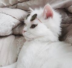 Le chat et pas jolie mes le stole et cool