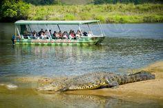 Salt water croc tour, Daintree River, Australia