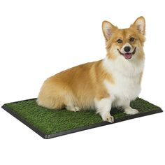 Best Choice Products Pet Potty Trainer Grass Mat Dog Puppy Training Pee Patch Pad Indoor Outdoor ** You can find more details by visiting the image link.