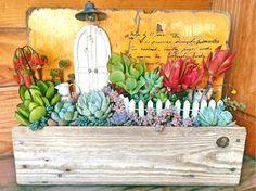 棚の画像 by keicomaさん | 棚と姫秋麗とサブセシリスとイリアと火祭りと乙女心とブルーリボンと野ばらの精とフーケリーとコチドレン ゴルビューと多肉植物と多肉箱庭と多肉植物の寄せ植えアイデアコンテストと今日の一枚とアレンジとガーデニングと小さな世界とビンテージ感
