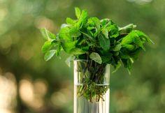 Arrêtez d'acheter sans cesse des herbes fraîches au supermarché! Avec cette méthode simple, faites-les pousser vous-même dans de l'eau!