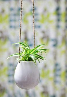 Hand Carved Ceramic Hanging Planter w/ Wave Design / Bright Blue Succulent Planter / Cactus Planter / Sgraffito Pottery Cactus Plant Pots, Planter Pots, Indoor Garden, Indoor Plants, Chlorophytum, Rubber Plant, Hanging Vases, Peace Lily, Spider Plants