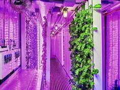 Square roots opened there doors, or should I said shipping containers, to the public who were able to see first hand the urban shipping container farms the company plans to popularize. Visitors.....